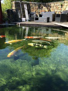 Klares Teichwasser bis 1,6m Tiefe