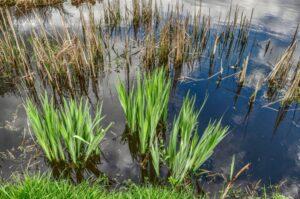 Teich pflege im Oktober der Pflanzen