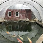 Teich pflege im Oktober mit einer Teichabdeckung