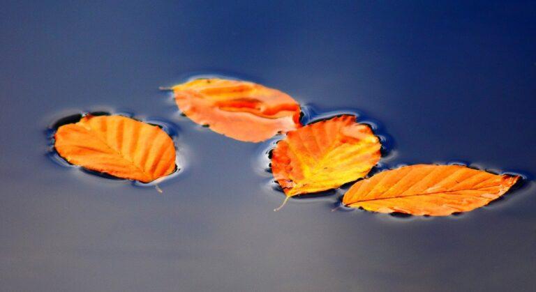 Teich mit Herbstlaub
